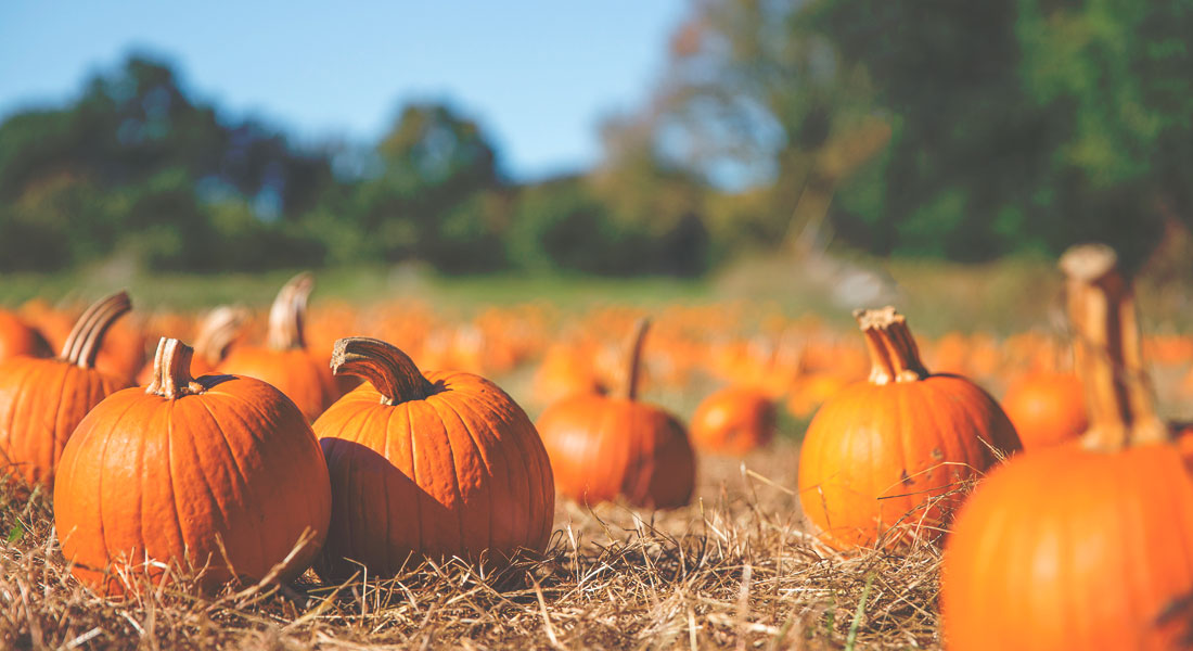 Pumpkin Picking at Hilltop Farm