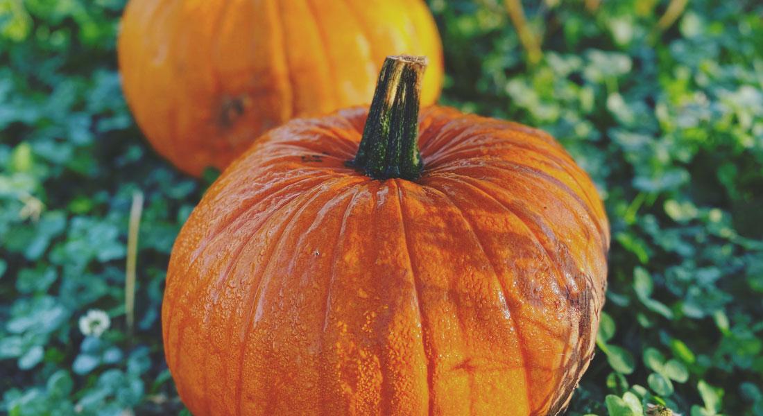 Pumpkin Picking at Hilltop Farm