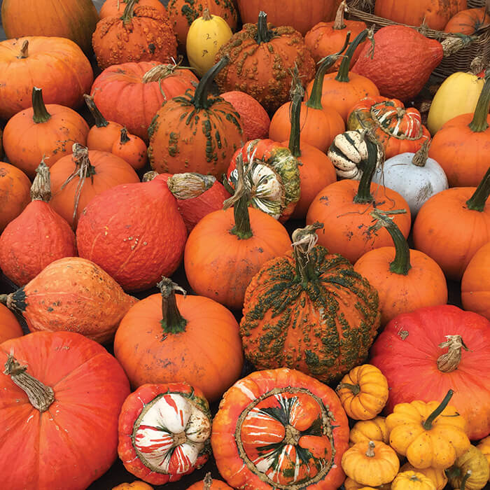 shop-pumpkins-gallery